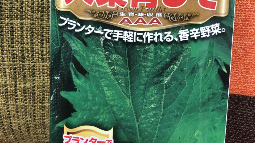 しその水耕栽培成長記録(10日目)
